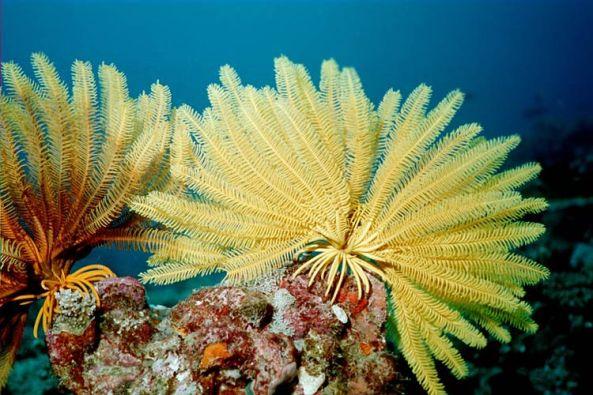 fosil sergisi deniz lalesi adnan oktar 3