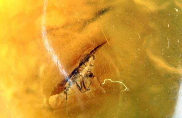 fosil sergisi hemiptera 2