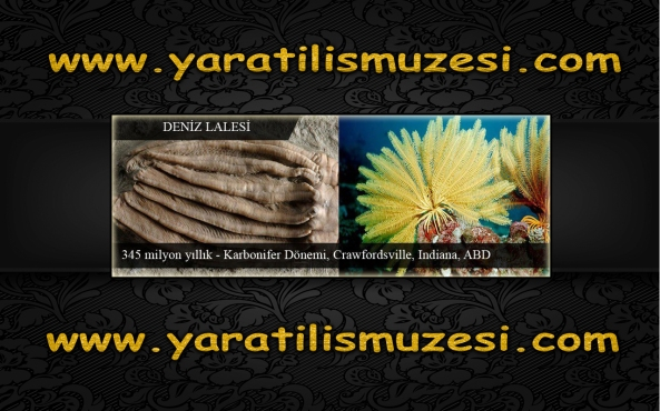 sahte fosil sergisi yanilgisi adnan oktar
