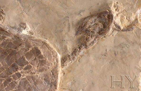 su kaplumbagasi fosili adnan oktar rasim ozan kutahyali 2