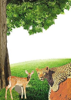 kaplan ceylan evrim teorisi adnan oktar harun yahya