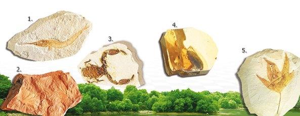 sahte fosil sergisi degil adnan oktar harun yahya pkk evrim teorisi