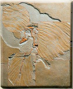 archæopteryx asimetrik tuy yapisi evrim teorisi fosil